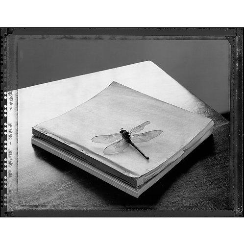Libélula/ Dragon-fly by Pedro David