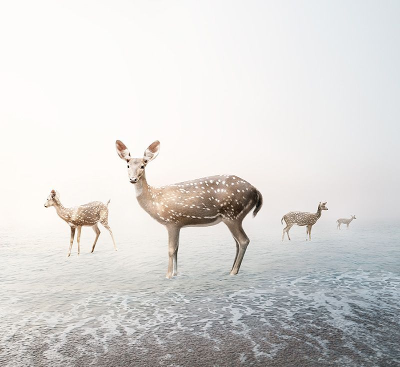 Stay my Deer, from the series Meditations 2019-2020 by Alice Zilberberg