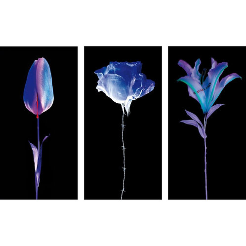 Fleurs blessées/ Wounded Flower installation (3 Limited Editions) by Yves Hayat