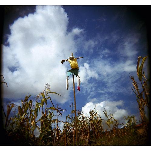 Espantalho/ Scarecrow by Pedro David
