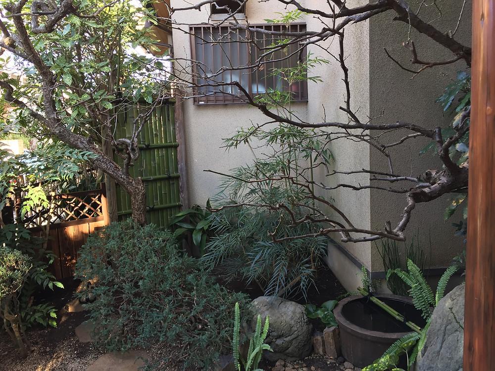 梅の剪定 坪庭