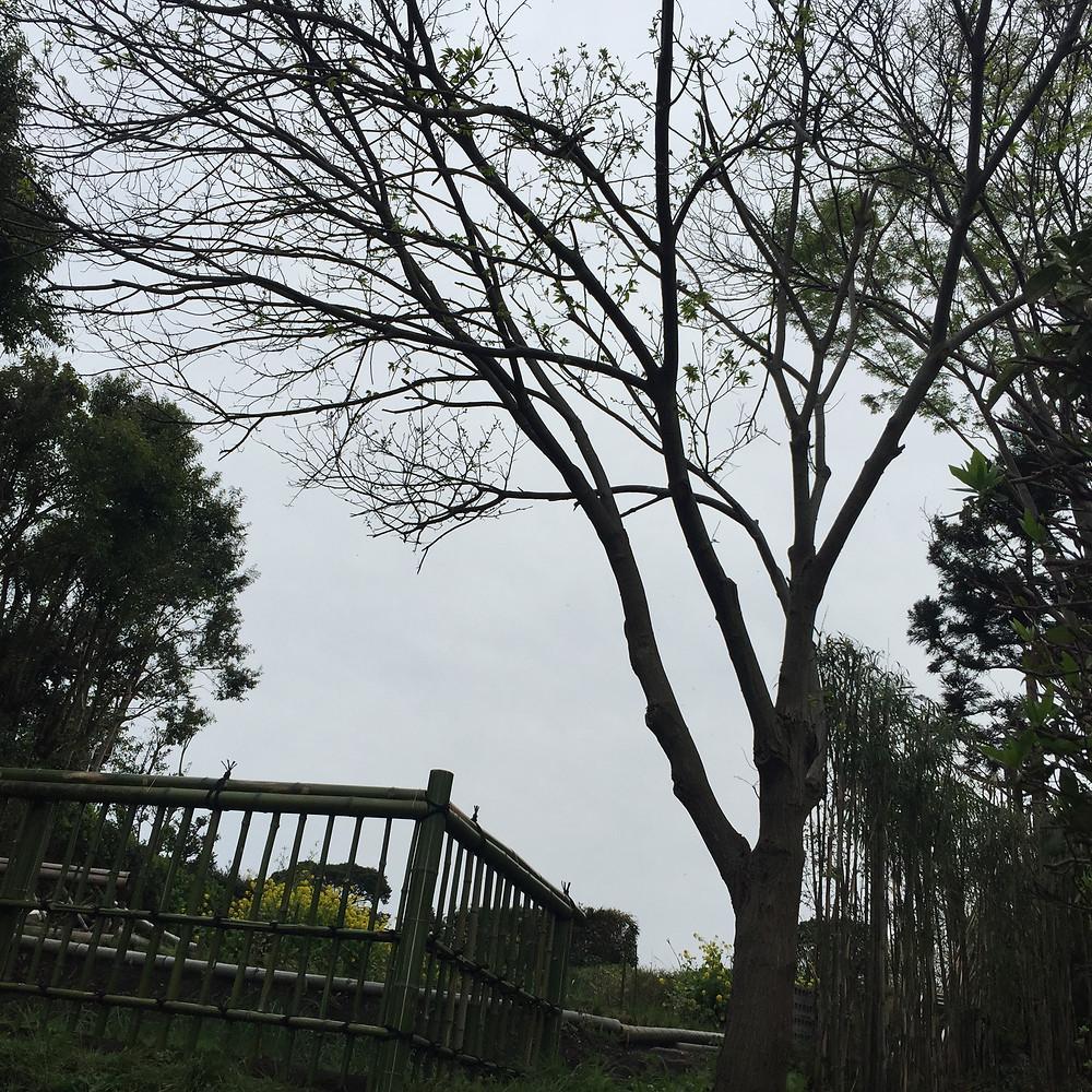 金閣寺垣3
