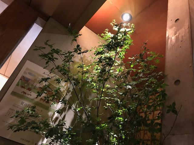 大徳寺 蕎麦 五2