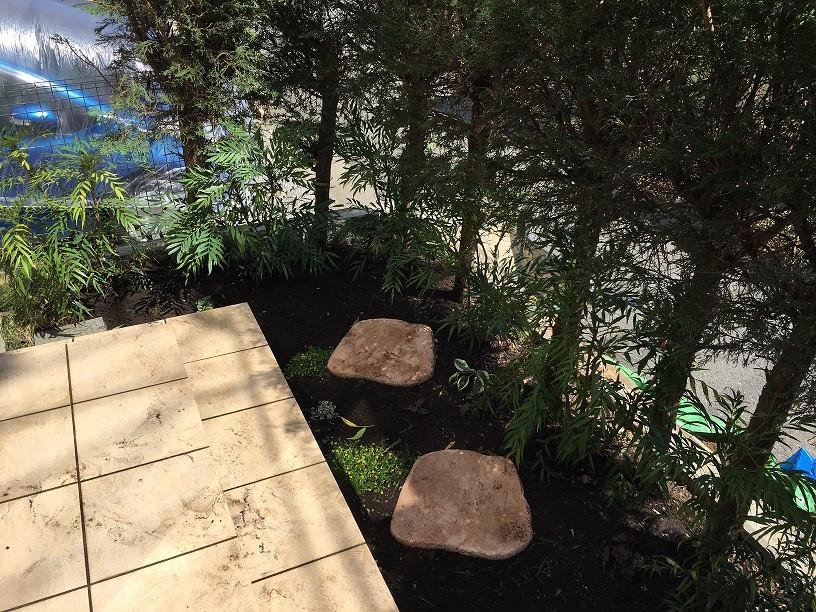 マホニアコンヒューサー植栽