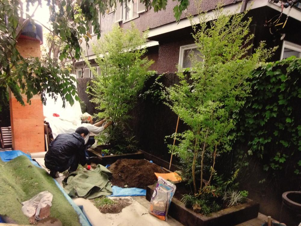 ヒメシャラ植栽風景
