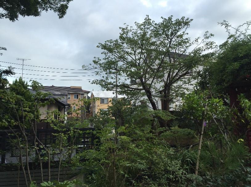 桜の剪定3