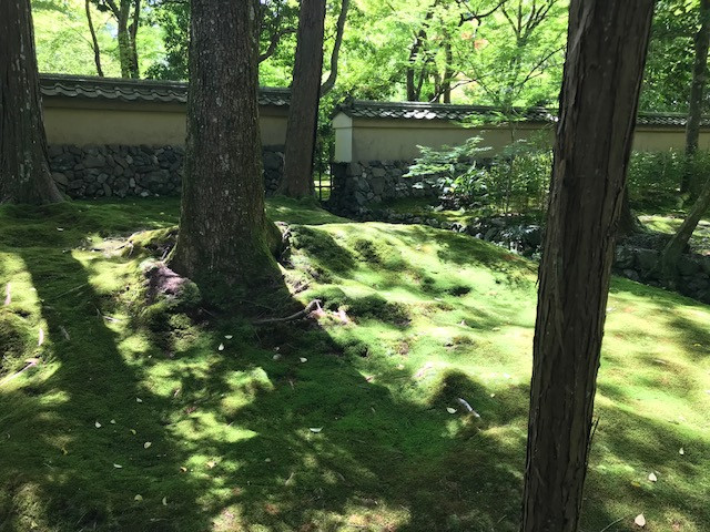 京都 西芳寺6
