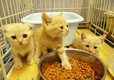 「ペットのおはか」は、動物愛護活動に力を入れていきます①