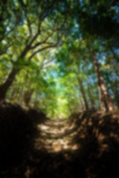 森のおはか写真④