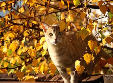 秋の病い。