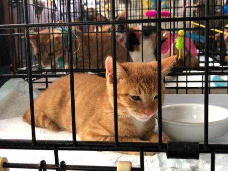 「ペットのおはか」は動物愛護活動に力を入れていきます!②
