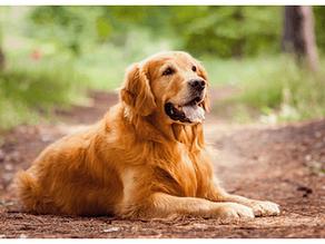 大型犬の火葬・供養について