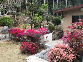 桜のあとは・・・