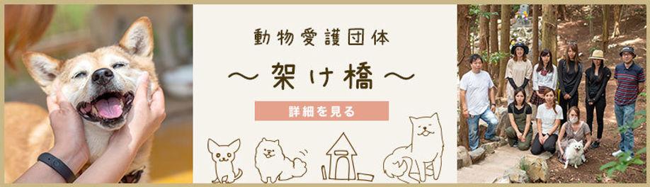 動物愛護団体「架け橋」