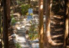 森のおはか写真①