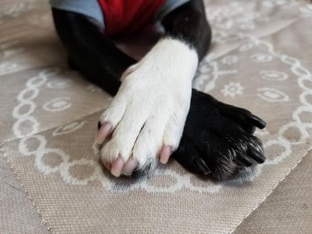 犬の皮膚病。