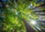 長崎市のペット霊園「ペットのおはか」