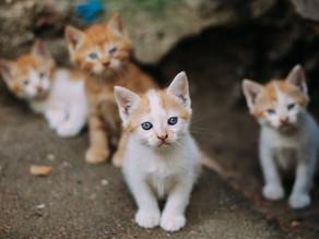 「地域猫」ってご存知ですか?