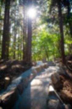 森のおはか写真②