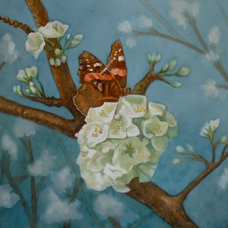Butterfly Feasting on a Flowering Plum Tree