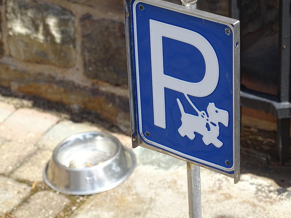 Scottsdale Pet Friendly Destinations