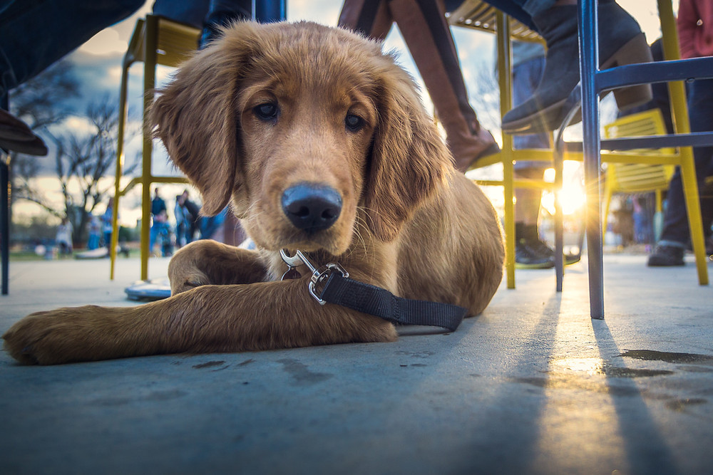 dog-friendly restaurants in Scottsdale