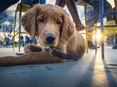 Dog Friendly Restaurants In Scottsdale