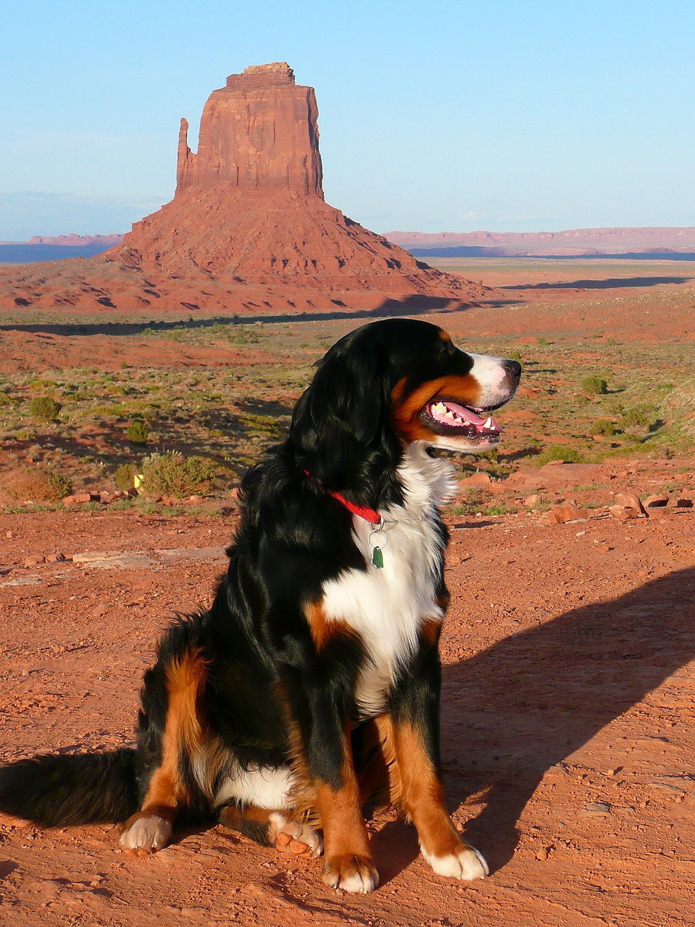 Dog Hikes and Trails in Scottsdale, Paradise Valley, North Phoenix