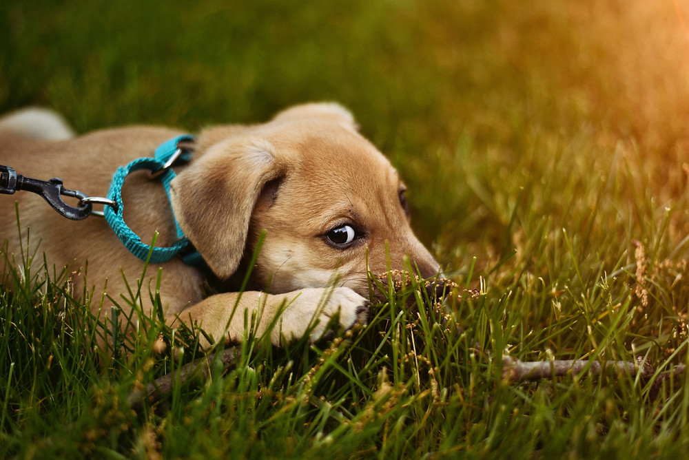 dog-spring-allergies-tips-and-tricks