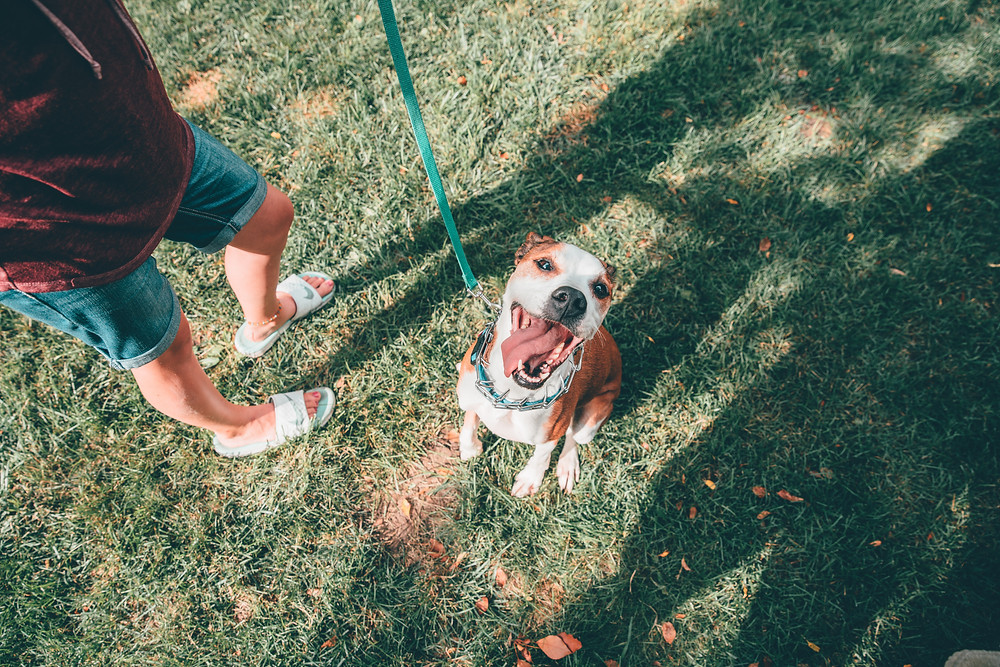Dog Parks in Scottsdale, Paradise Valley, North Phoenix