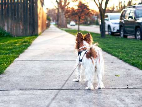 A Walk A Day Keeps the Doctor Away