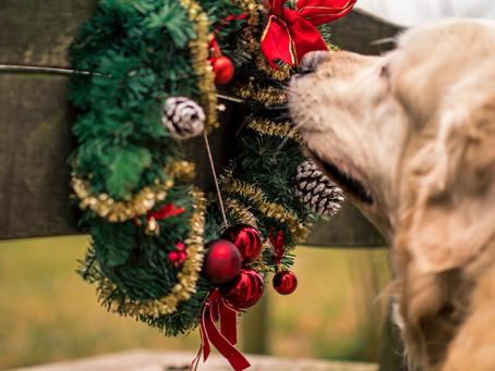 Have a Pet Safe Christmas