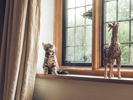 Entertaining Your Cat: A DIY Approach