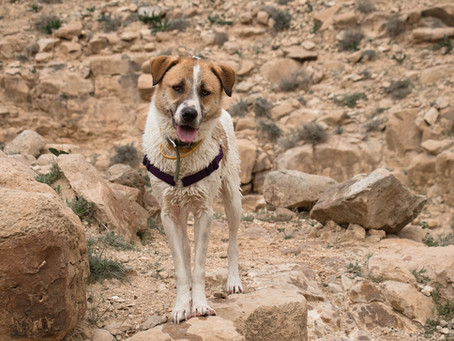 Arizona Outdoor Adventures With Your Pup