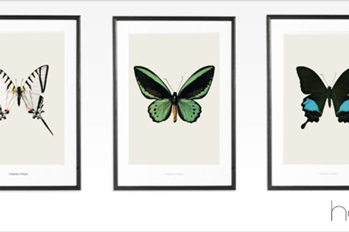 Hagedornhagen poster Butterfly S3 (42*59)