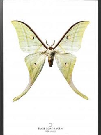 Hagedornhagen poster Butterfly S15 (50*70)