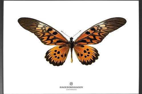 Hagedornhagen poster S16 (70*100)