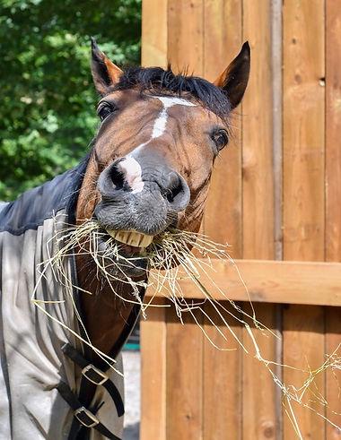 horse hay pic.jpeg