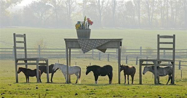 horseshelter.jpg