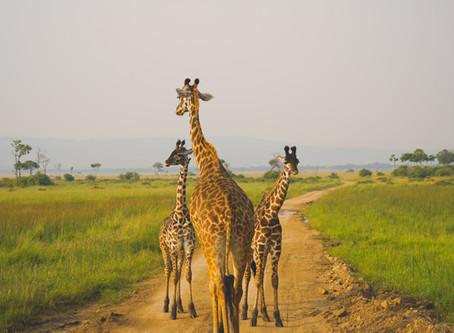 Keňské safari z Prahy levně s Katarci