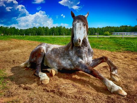 Kde zažijete pohled na svět z koňského hřbetu