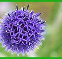boule violette.jpg