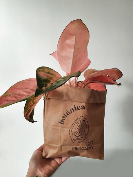 embalagem _botânica do mercado