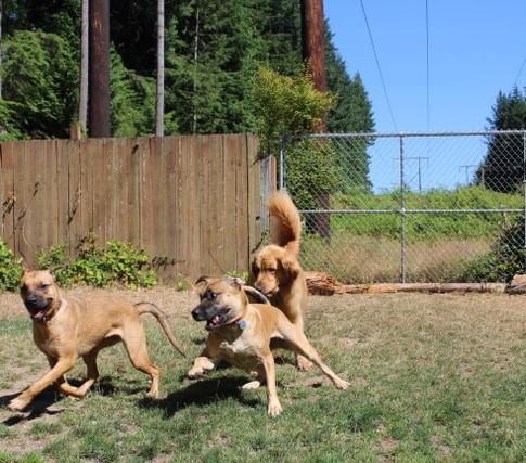 Dog Boarding, Kennel Free Dog Boarding, Dog Day Care, Free Range Dog Boarding, Overnight Boarding