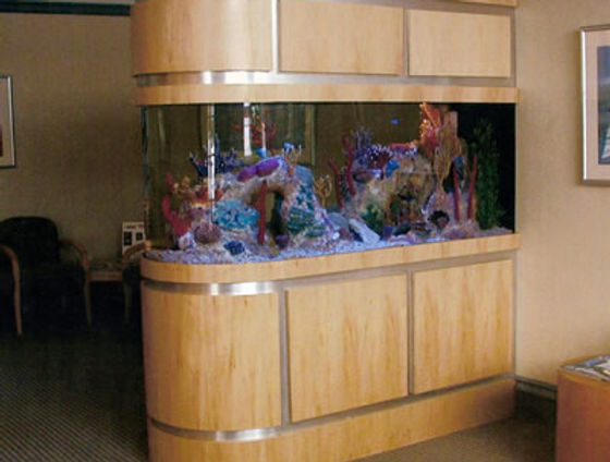 Aquarium, Aquarium Maintenance, Fish Tanks, Custom Aquariums, Outdoor Ponds, Aquarium Repairs, Aquarium Cleaning