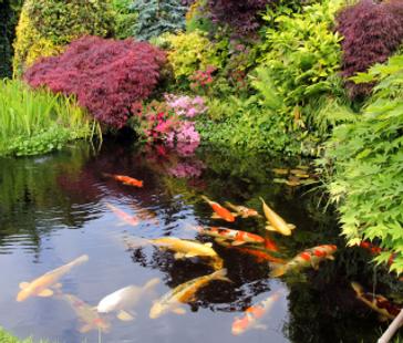 Aquarium, Aquarium Maintenance, Fish Tanks, Custom Aquariums, Outdoor Ponds, Aquarium Repairs, Aquarium Cleaning