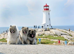 Lexie, Zivah and Raevyn at Peggy's Cove
