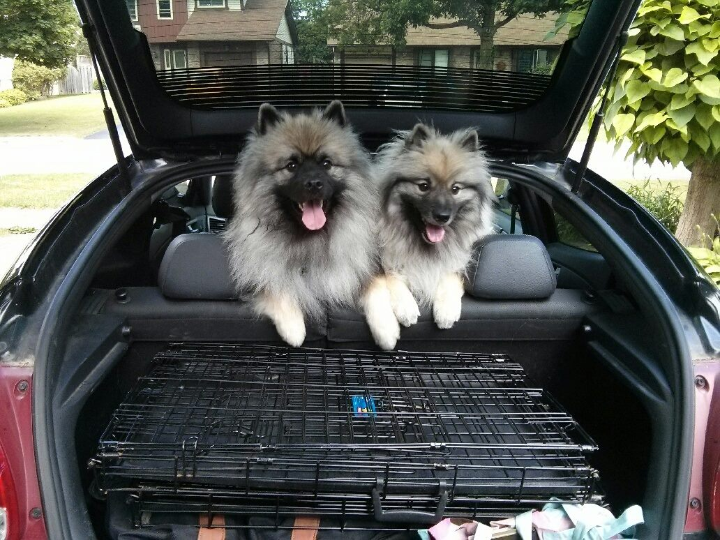 Cash and Penny going on a road trip!