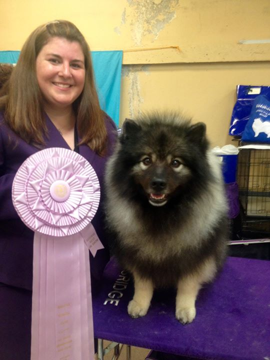 Dante won the breed, group, then Reserve Best In Show!! Thank you to Mrs