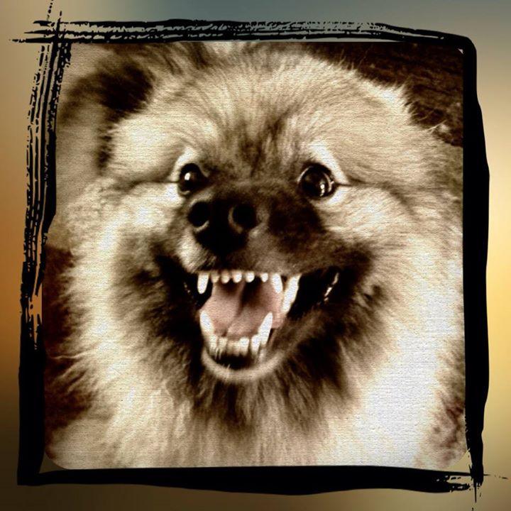 Smiley puppy!